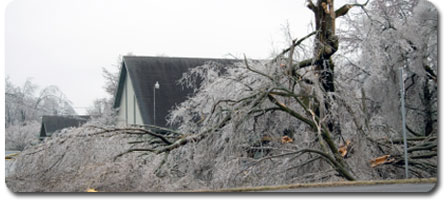 Trees with Ice Damage