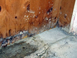 NC Water Damage - Public Adjuster